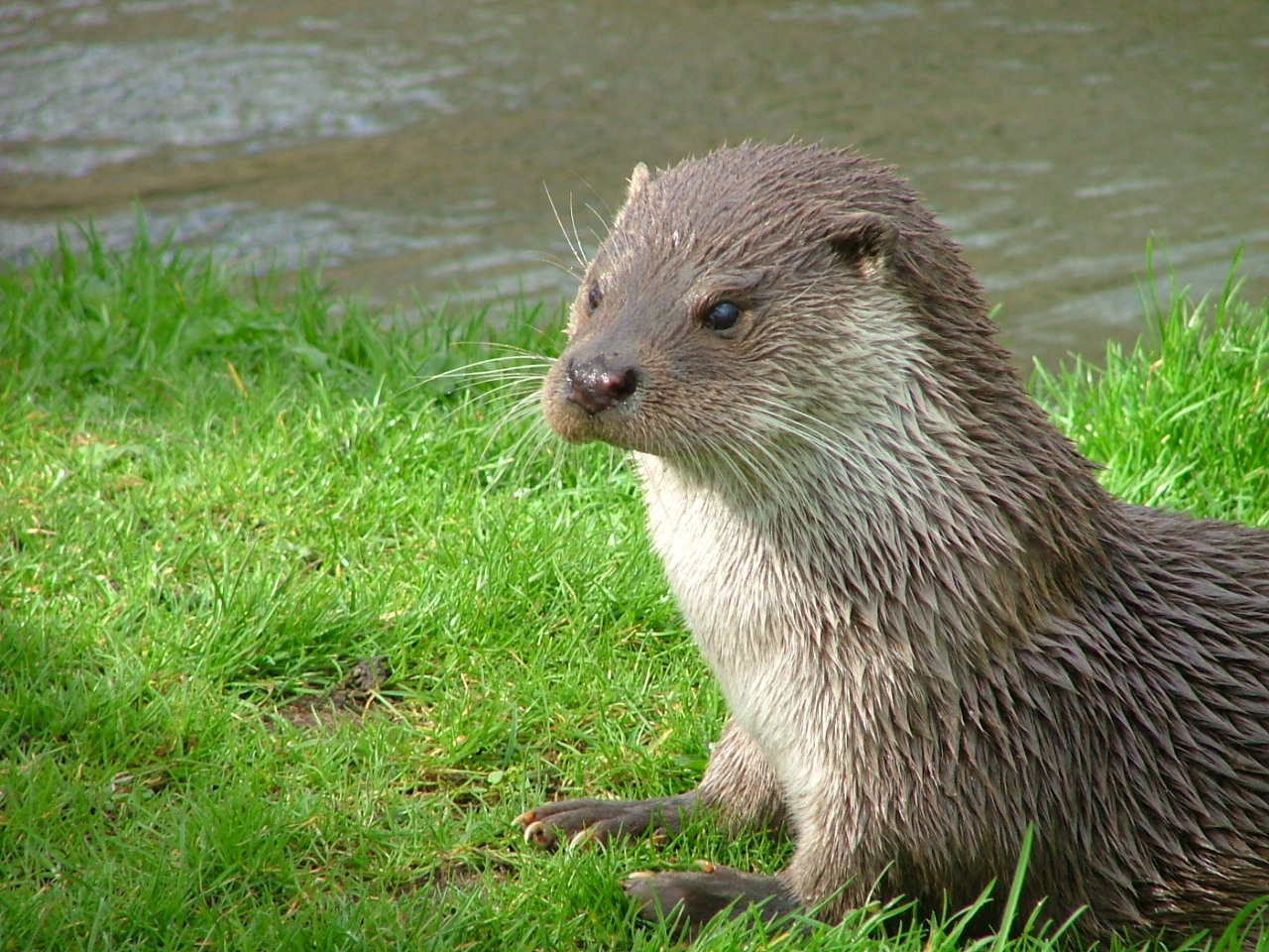 (not THE otter!)